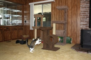 cat play area with cat