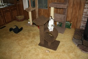 cat play area with posing cat